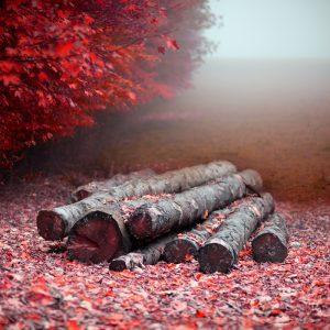eric_frey_automne